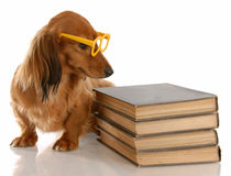 Dog education Royalty Free Stock Photo