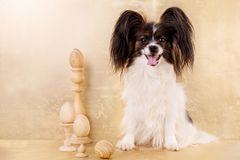 Dog and Eggs on stands on a gold background. Easter concert royalty free stock photo