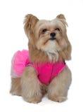 Dog with Elegant Posing Stock Images