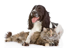 The dog embraces a cat. looking at camera. Isolated on white bac stock photography