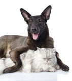 Dog embraces a cat. looking at camera. Royalty Free Stock Image