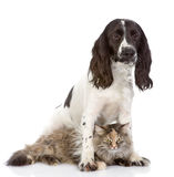 The dog embraces a cat. looking at camera Royalty Free Stock Photos