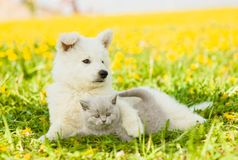 Dog embracing cat on a dandelion field stock photo