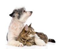 Dog embracing cat and looking away. isolated on white background Royalty Free Stock Images