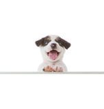 Dog with empty boar Stock Photography