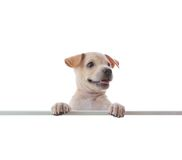 Dog with empty boar Stock Images