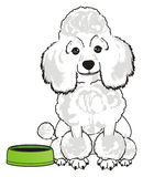 Dog and empty bowl. White poodle sit near an empty green bowl and want to eat Stock Images
