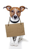 Dog with empty cardboard Royalty Free Stock Photo