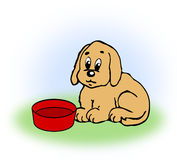 Dog with empty Food Bowl. Stock Photos