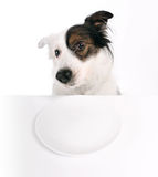Dog and empty plate Royalty Free Stock Image