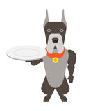 Dog with an empty plate Stock Photo
