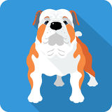 Dog English Bulldog icon flat design Stock Photography