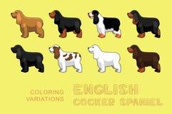 Dog English Cocker Spaniel Coloring Variations Vector Illustration Royalty Free Stock Photos