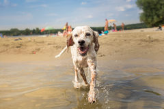 Dog enjoy time in water Stock Photography