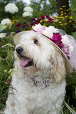 Dog Enjoying Flower Garden Royalty Free Stock Photography