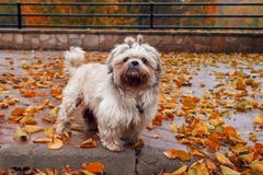 HAPPY DOG JOY IN THE NATURE stock photography