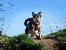 Dog enjoying the outdoors stock photo