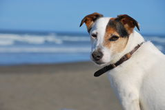 Dog enjoying the sea breeze Stock Image