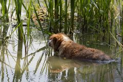 Dog enjoys the cool water of the lake on a hot summer day royalty free stock images
