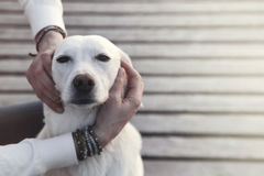Dog enraptured in the embrace of his owner stock photos