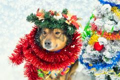 Dog entangled in colorful tinsel near Christmas tree royalty free stock photography