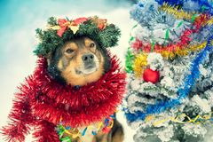 Dog entangled in colorful tinsel near Christmas tree royalty free stock image