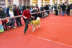 Dog entery Royalty Free Stock Image