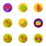 Dog equipment set icons in flat style. Big collection dog equipment vector symbol  Stock Images