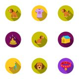 Dog equipment set icons in flat style. Big collection dog equipment vector symbol stock illustration Royalty Free Stock Photography