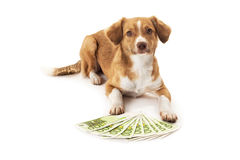 Dog with euro banknote Royalty Free Stock Photography