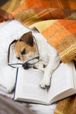 Dog evening reading before bedtime. Happy cute dog with reading glasses fell asleep in a comfortable bed with a book Stock Photography
