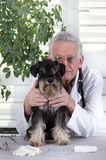 Dog on examination Stock Images