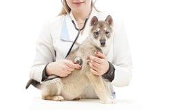 Dog on examination Royalty Free Stock Photos