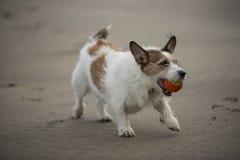 Dog exercise Stock Photography