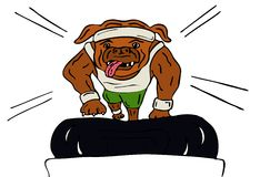 Dog exercising on treadmill Stock Photos