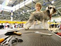 Dog exhibition Stock Photo