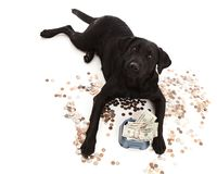 Dog Expenses Stock Photos