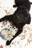 Dog Expenses Royalty Free Stock Images