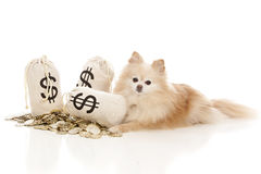 Dog Expenses Royalty Free Stock Photo