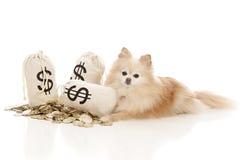 Dog Expenses Royalty Free Stock Photo