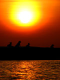 Dog Exploration. Wild dogs enjoy their evening at the beach Stock Photo