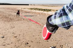 Dog on a extendable leash or lead on a beach in winter Royalty Free Stock Photography