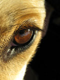 Dog eye 1. Close-up of an dog eye Stock Images