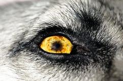 Dog Eye Royalty Free Stock Photos
