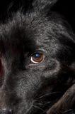 Dog eye Royalty Free Stock Image
