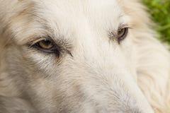 Dog eye Royalty Free Stock Photo