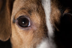 Dog eye macro Royalty Free Stock Images