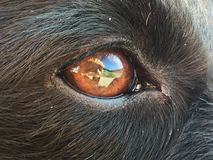Dog eye with the sky reflected in it. royalty free stock photography