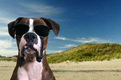 Dog in eyeglasses Stock Photos