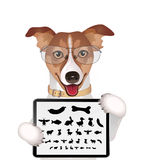 Dog with eyeglasses and eyes chart Stock Photos